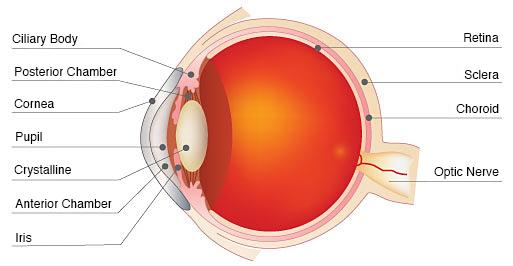 03 05 01 partes del ojo