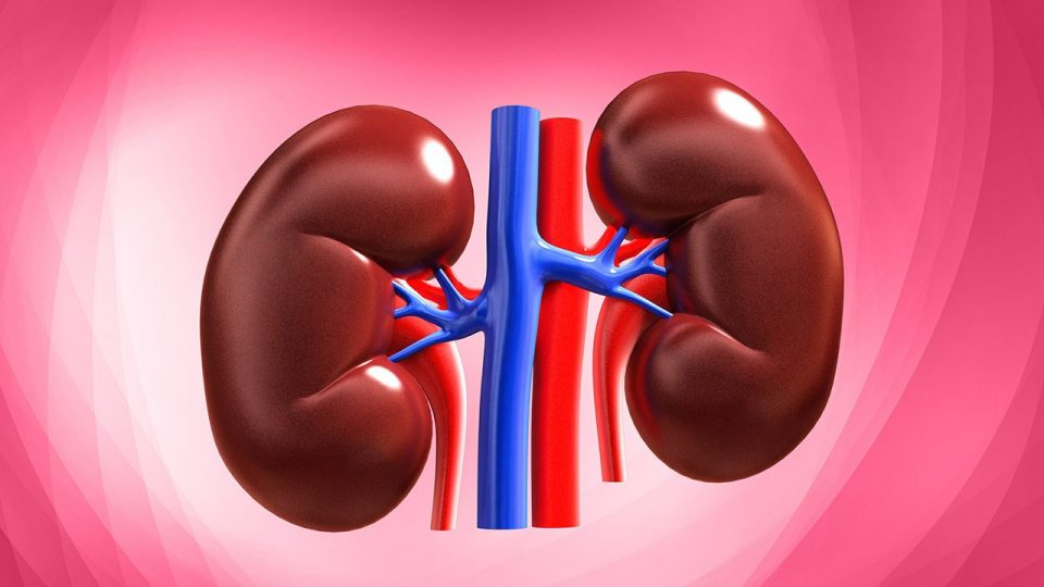 What is and what happens when there's Diabetic Nephropathy or Kidney Damage?